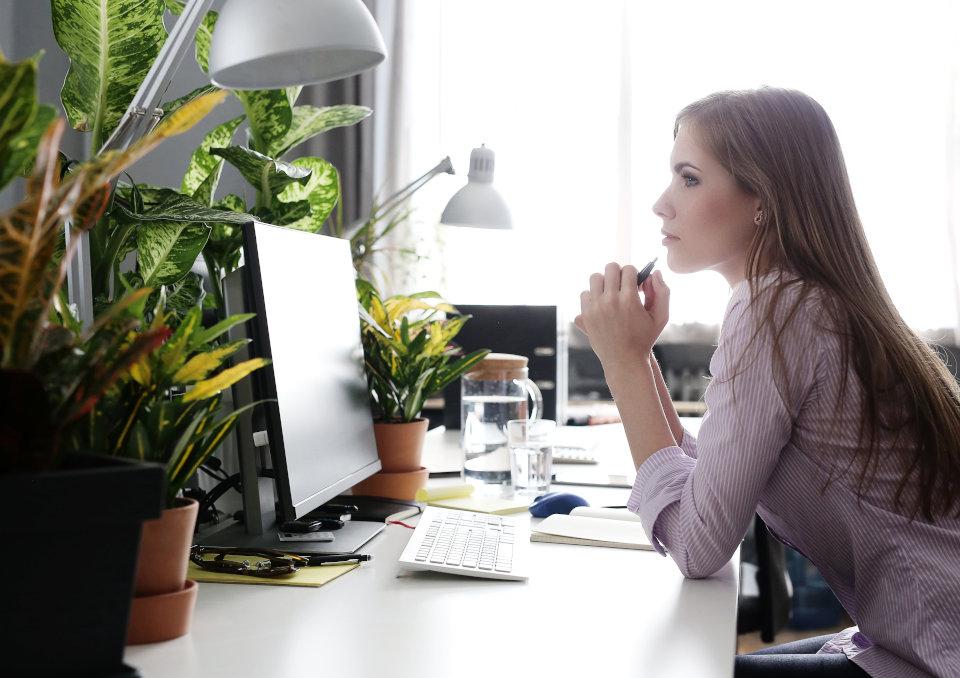 Jakie wybrać rośliny do biura?